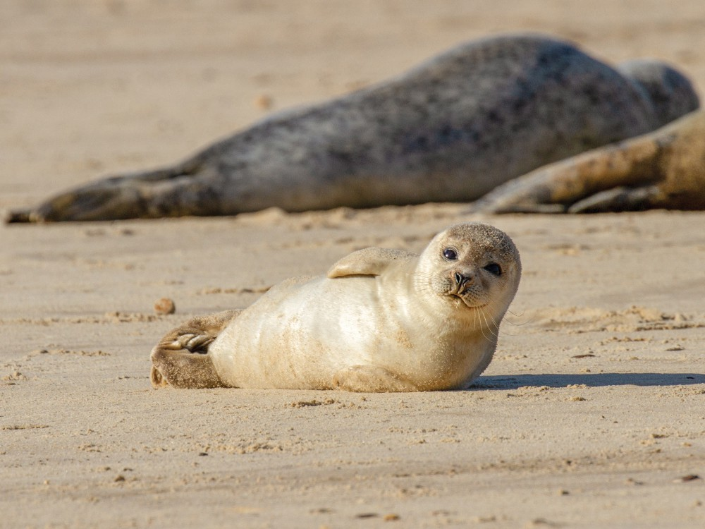 A seal laying on the beach