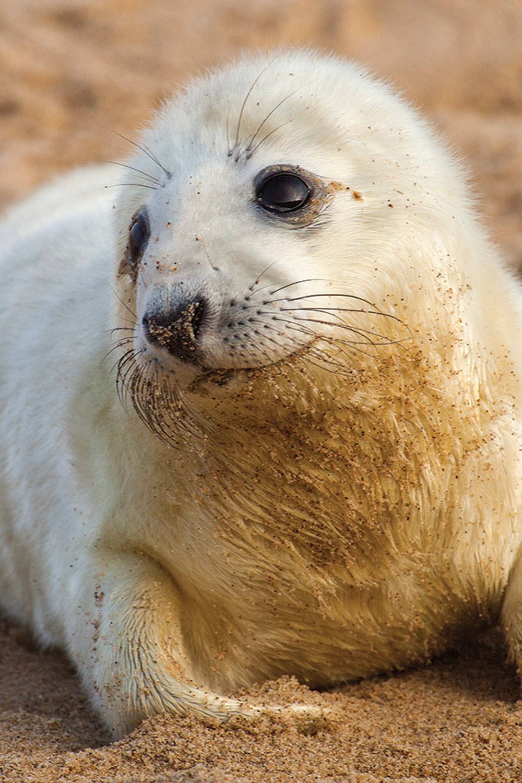 A seal close up