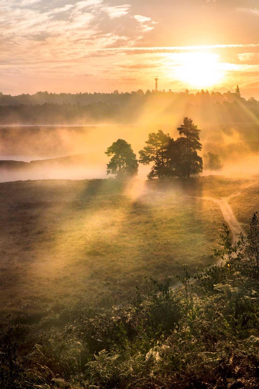 Mist at Dersingham bog