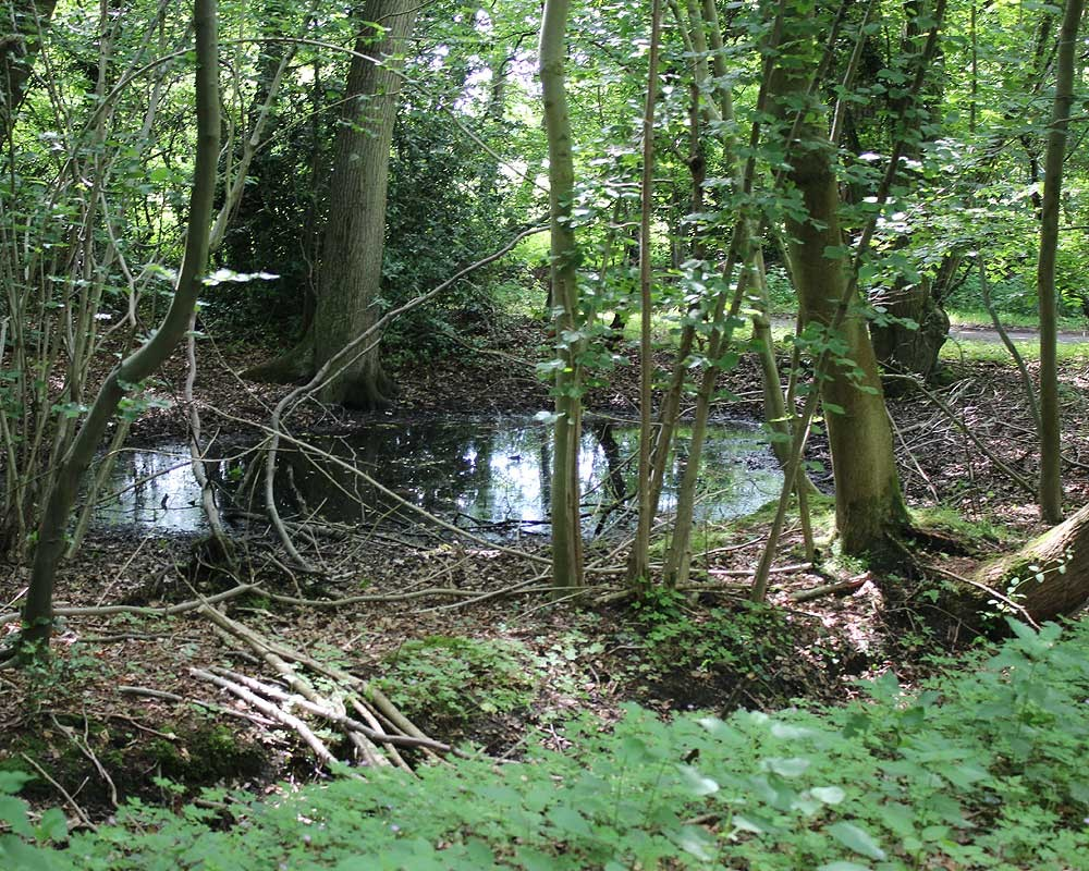 A 'pingo' at a secret location in the heart of Norfolk which provides a safe haven for Norfolk's pond frogs