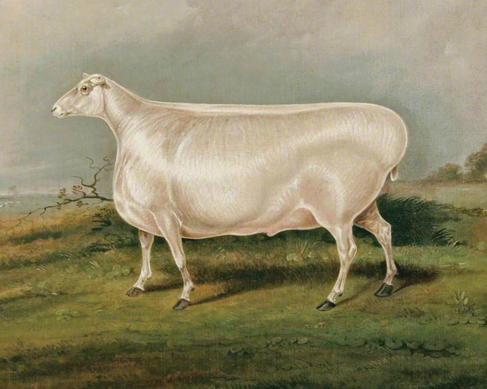 Painting of an Enormous sheep