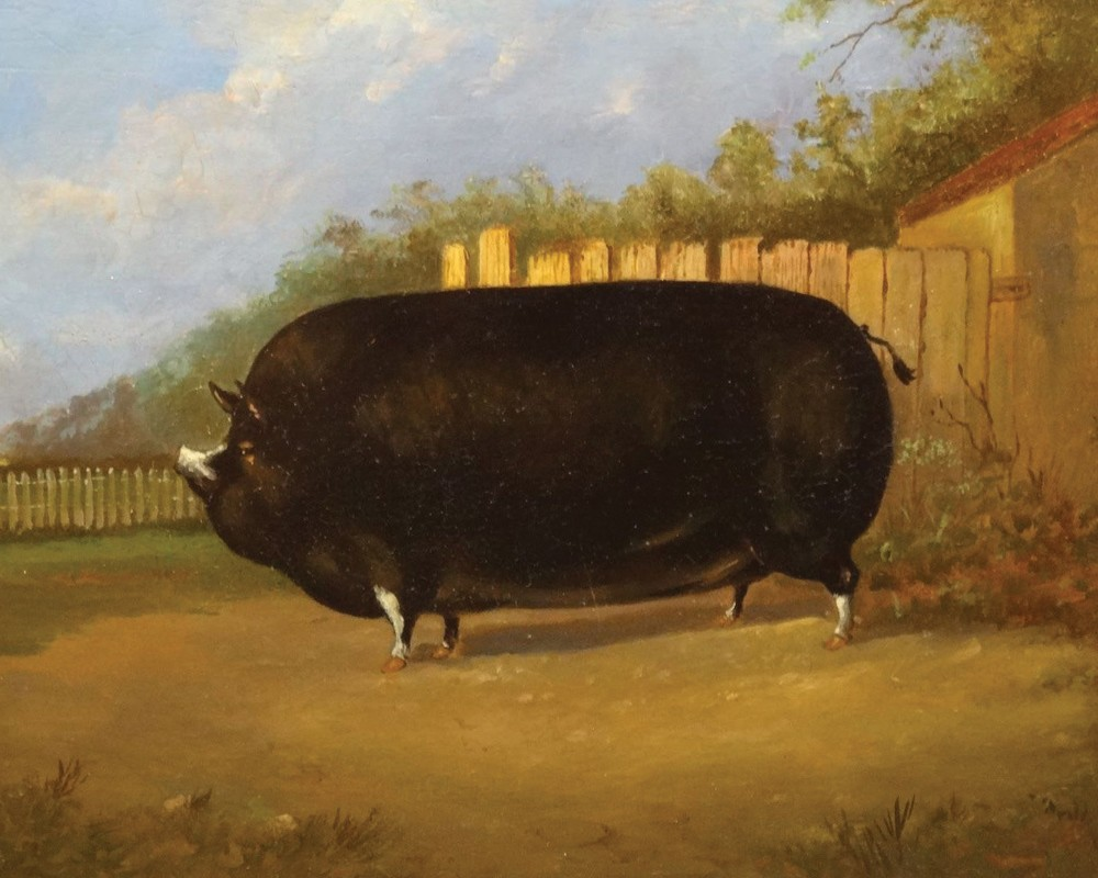 Painting of a massive pig