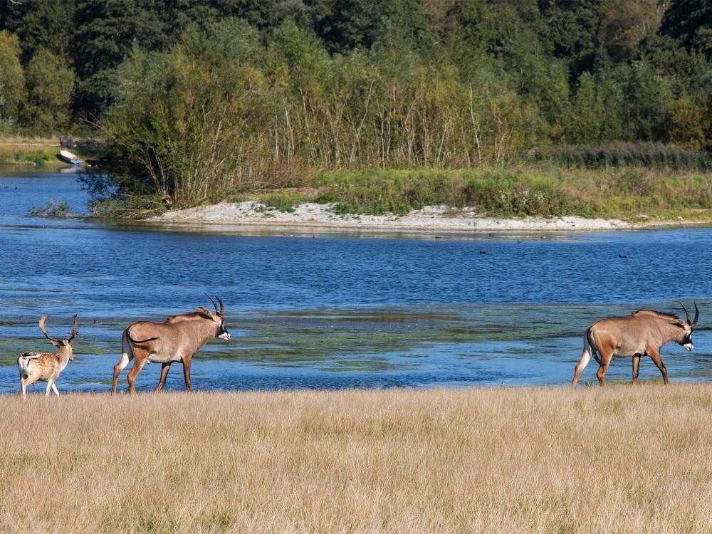 Wataunga Nature Reserve
